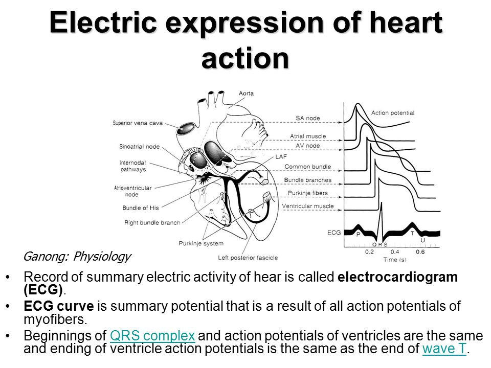 Electric expression of heart action Record of summary electric activity of hear is called electrocardiogram (ECG).