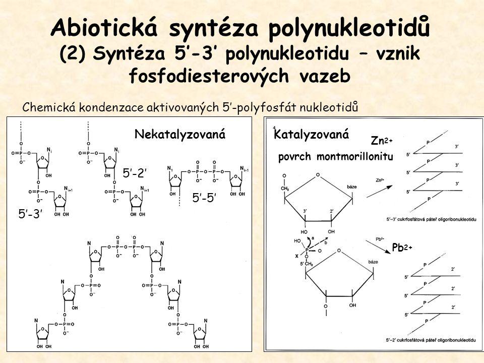 Abiotická syntéza polynukleotidů (2) Syntéza 5'-3' polynukleotidu – vznik fosfodiesterových vazeb Zn 2+ povrch montmorillonitu Pb 2+ Chemická kondenza