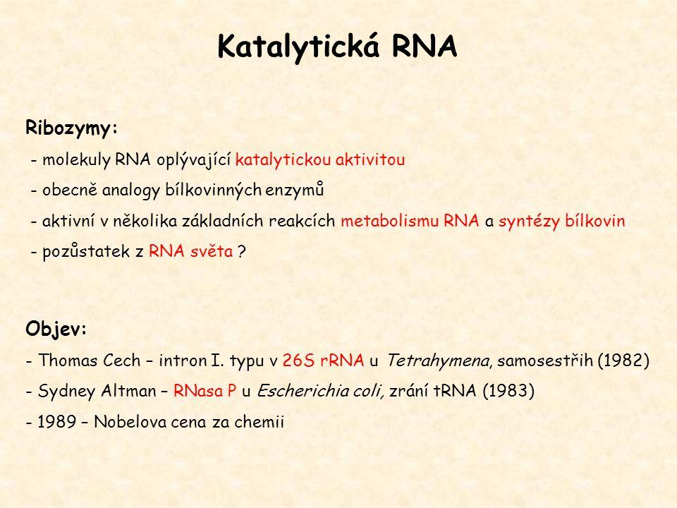 Katalytická RNA Ribozymy: - molekuly RNA oplývající katalytickou aktivitou - obecně analogy bílkovinných enzymů - aktivní v několika základních reakcí
