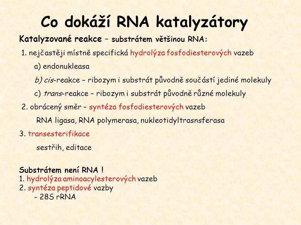 Katalyzované reakce – substrátem většinou RNA: 1. nejčastěji místně specifická hydrolýza fosfodiesterových vazeb a) endonukleasa b) cis-reakce – riboz