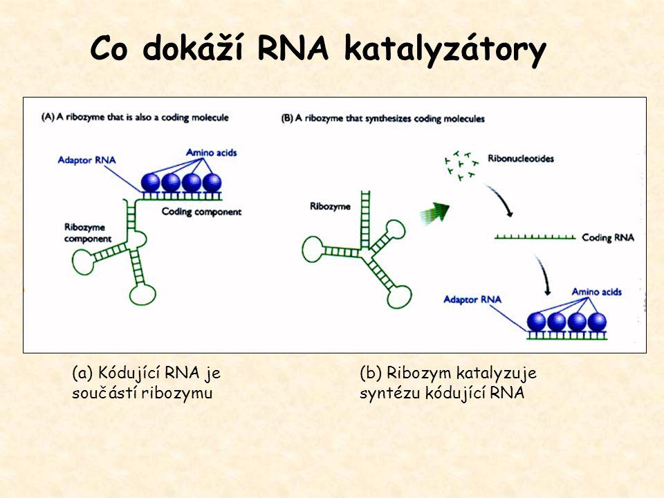 (a) Kódující RNA je součástí ribozymu (b) Ribozym katalyzuje syntézu kódující RNA