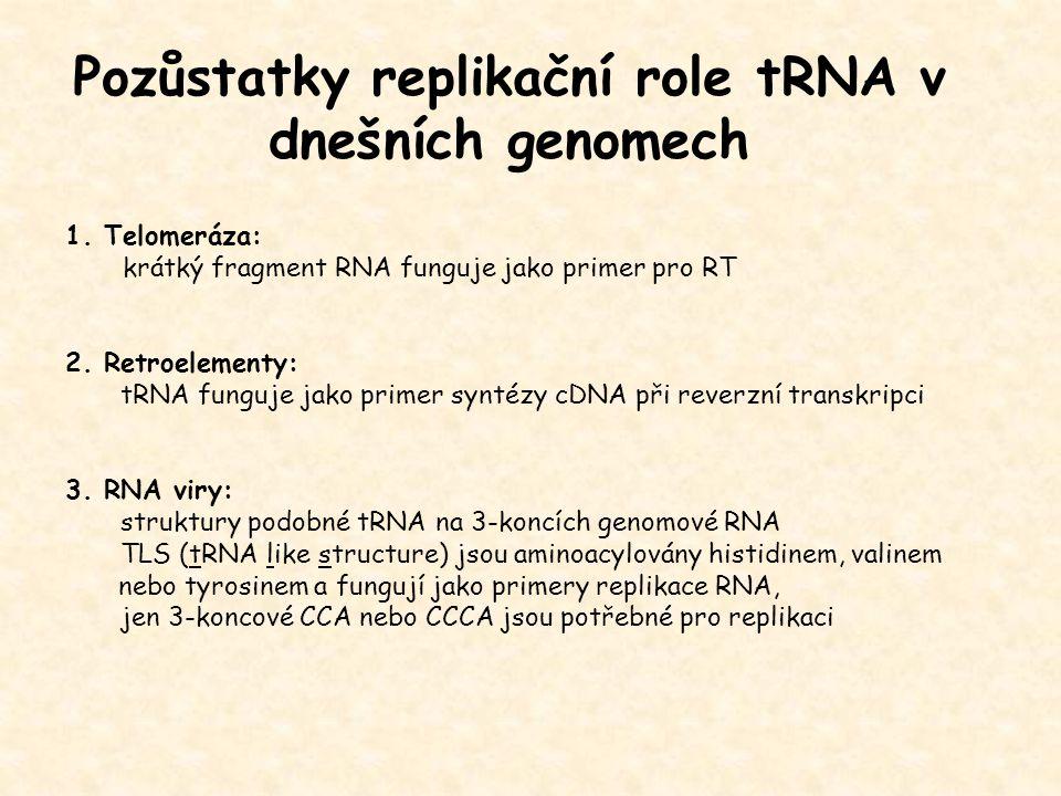 Pozůstatky replikační role tRNA v dnešních genomech 1. Telomeráza: krátký fragment RNA funguje jako primer pro RT 2. Retroelementy: tRNA funguje jako
