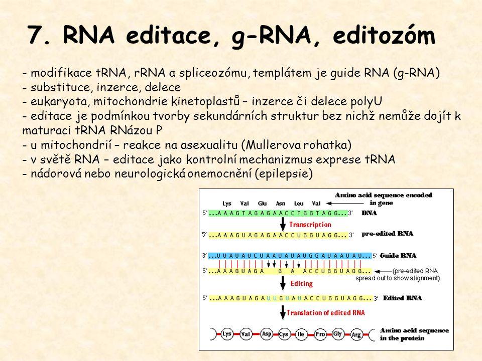 7. RNA editace, g-RNA, editozóm - modifikace tRNA, rRNA a spliceozómu, templátem je guide RNA (g-RNA) - substituce, inzerce, delece - eukaryota, mitoc