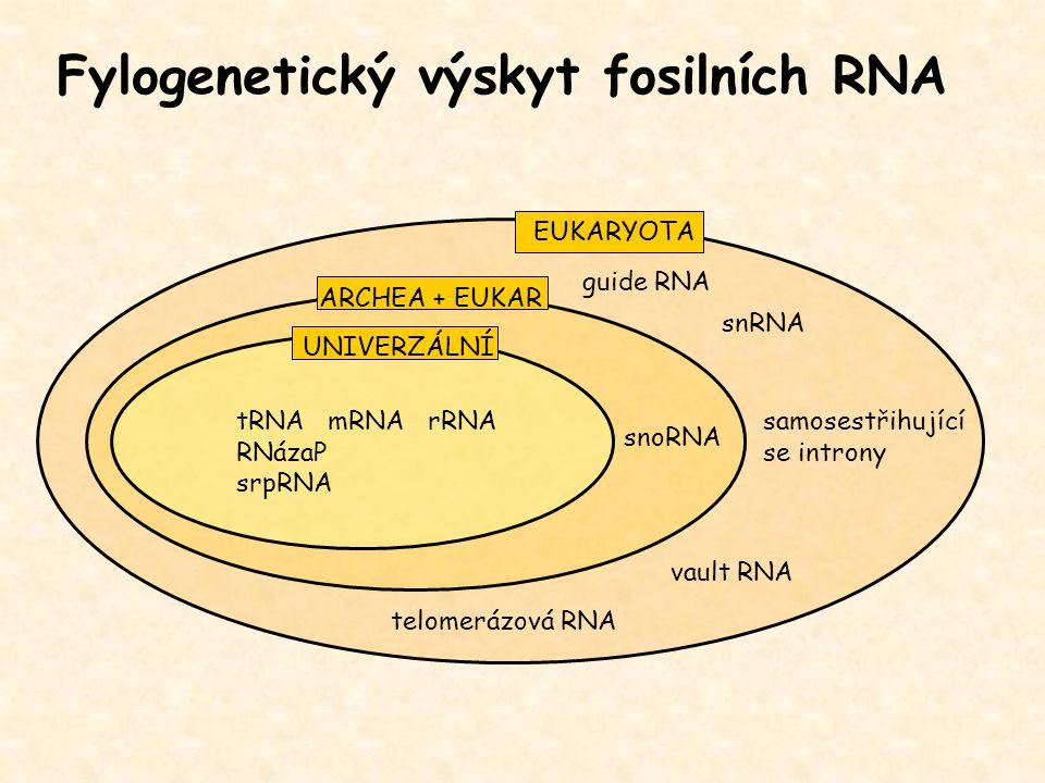 Fylogenetický výskyt fosilních RNA tRNA mRNA rRNA RNázaP srpRNA snoRNA guide RNA samosestřihující se introny snRNA vault RNA telomerázová RNA UNIVERZÁ