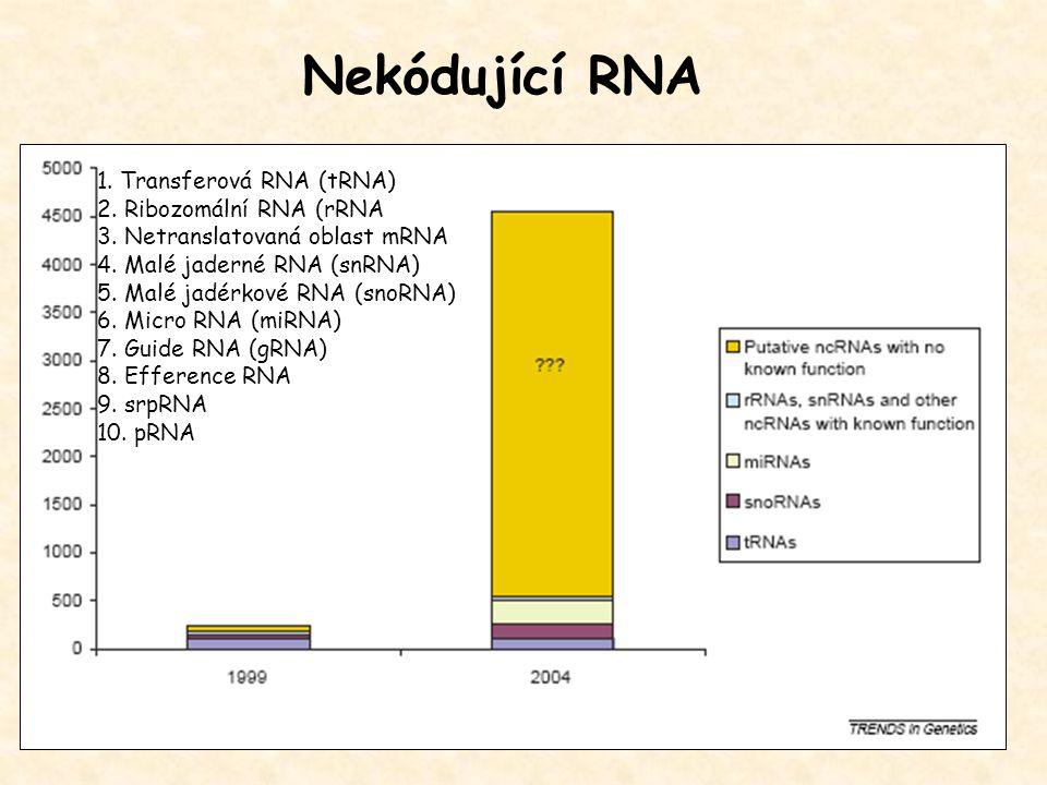 Nekódující RNA 1. Transferová RNA (tRNA) 2. Ribozomální RNA (rRNA 3. Netranslatovaná oblast mRNA 4. Malé jaderné RNA (snRNA) 5. Malé jadérkové RNA (sn