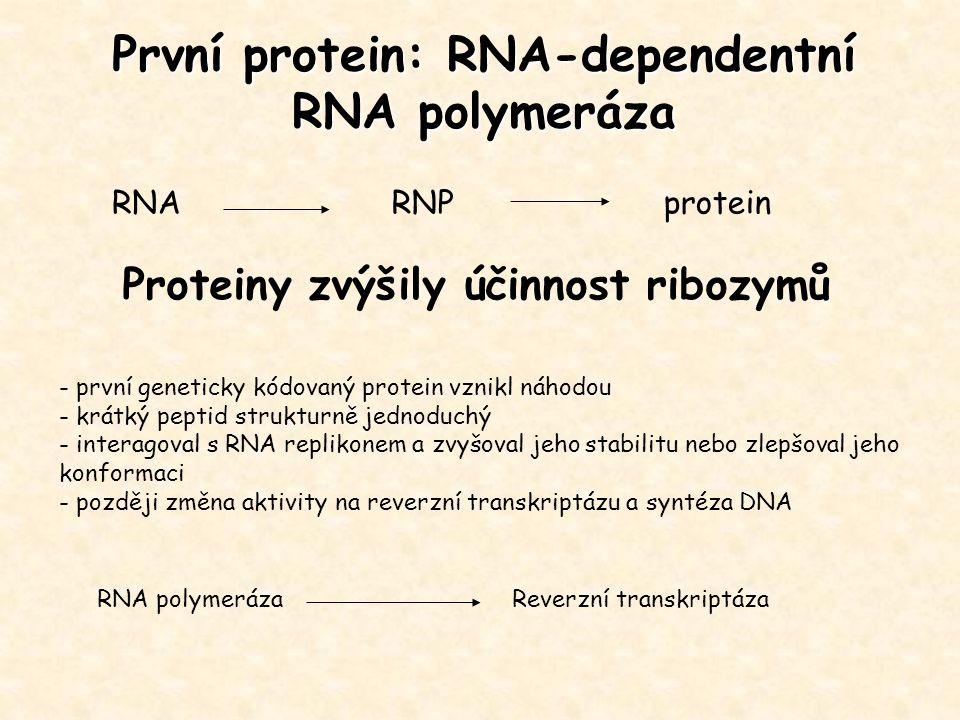 První protein: RNA-dependentní RNA polymeráza - první geneticky kódovaný protein vznikl náhodou - krátký peptid strukturně jednoduchý - interagoval s