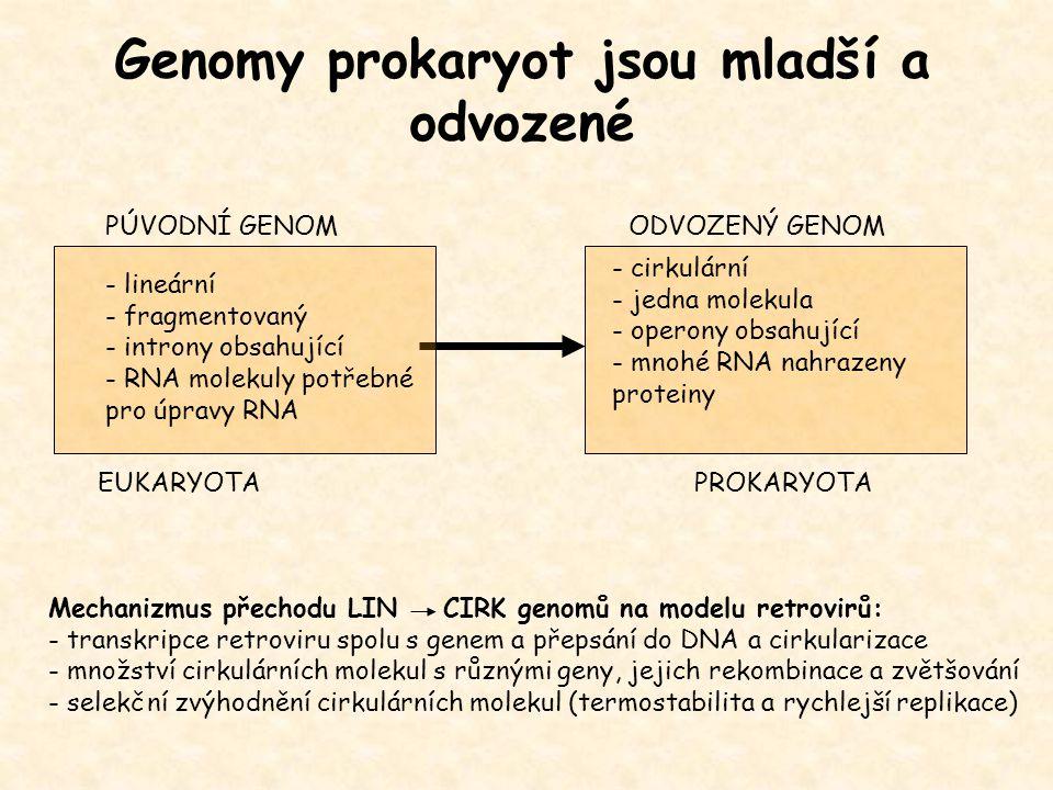 - cirkulární - jedna molekula - operony obsahující - mnohé RNA nahrazeny proteiny - lineární - fragmentovaný - introny obsahující - RNA molekuly potře