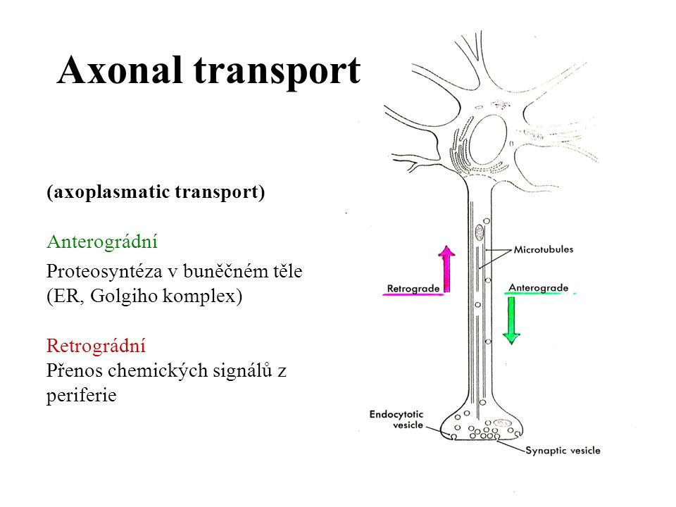 Transduction of signals on the cell level Axonální část –akční potenciál, šíření bez dekrementu, zákon vše nebo nic (Membrána vzrušivá, vodivá) Somatodendritická část – pasivní propagace signálu, s dekrementem (Membrána dráždivá, nevodivá)