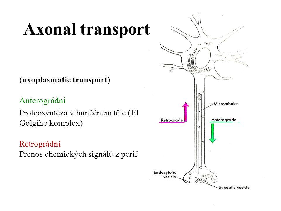 (axoplasmatic transport) Anterográdní Proteosyntéza v buněčném těle (ER, Golgiho komplex) Retrográdní Přenos chemických signálů z periferie Axonal tra