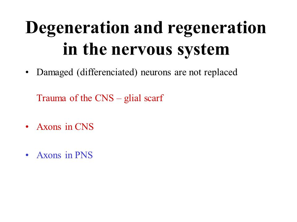 Degeneration and regeneration in the nervous system Damaged (differenciated) neurons are not replaced Trauma of the CNS – glial scarf Axons in CNS Axons in PNS