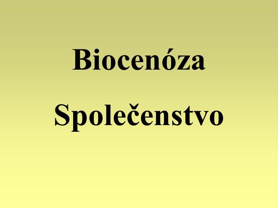 Biocenóza - společenstvo všechno živé na určité ploše zákonité seskupení ekotop vzájemná provázanost organismů