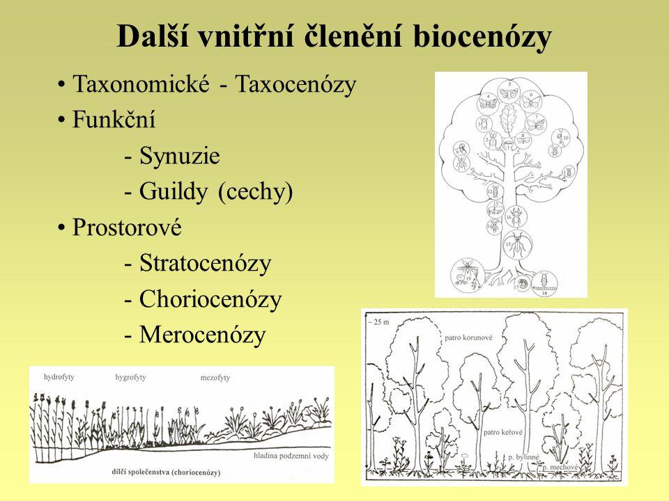 Další vnitřní členění biocenózy Taxonomické - Taxocenózy Funkční - Synuzie - Guildy (cechy) Prostorové - Stratocenózy - Choriocenózy - Merocenózy