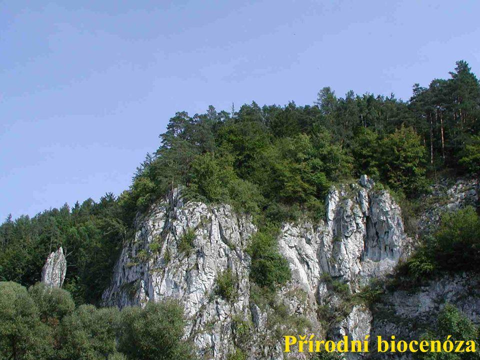 Přirozená biocenóza