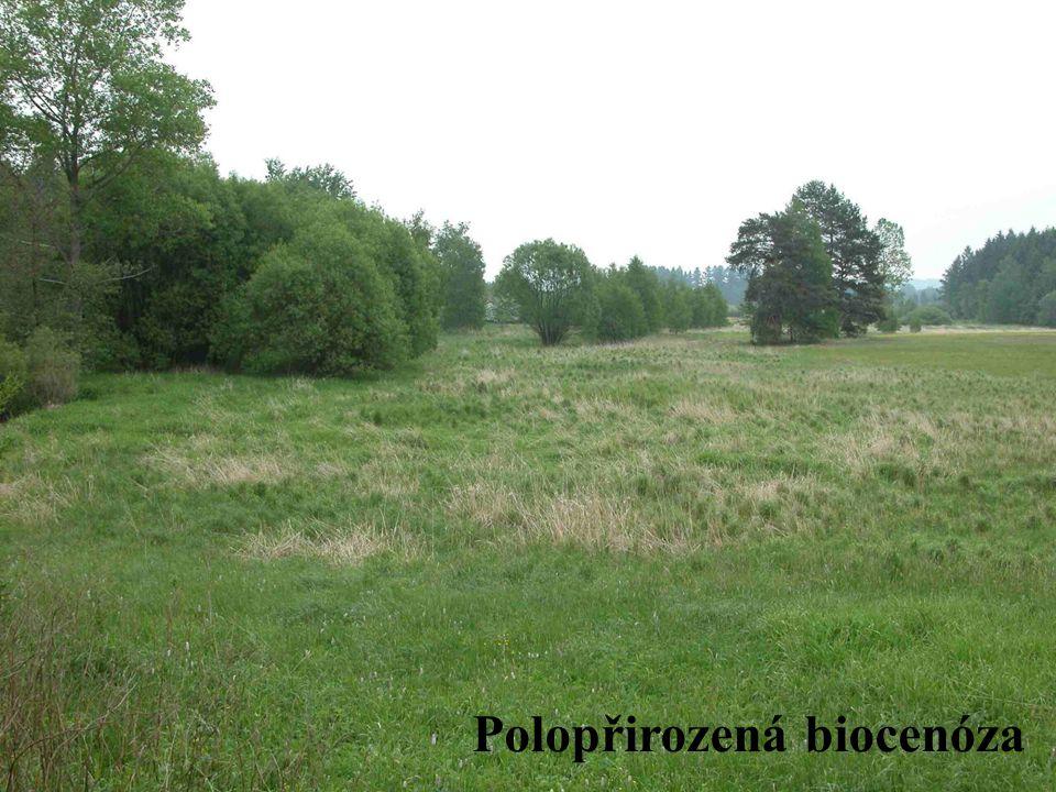 Typy klimaxu klimatický klimax edafický klimax antropogenní klimax (paraklimax) Biocenózy zonální zonobiomy (pásma) azonální, extrazonální pedobiomy orobiomy (stupně)