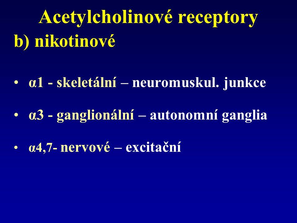Acetylcholinové receptory b) nikotinové α1 - skeletální – neuromuskul.
