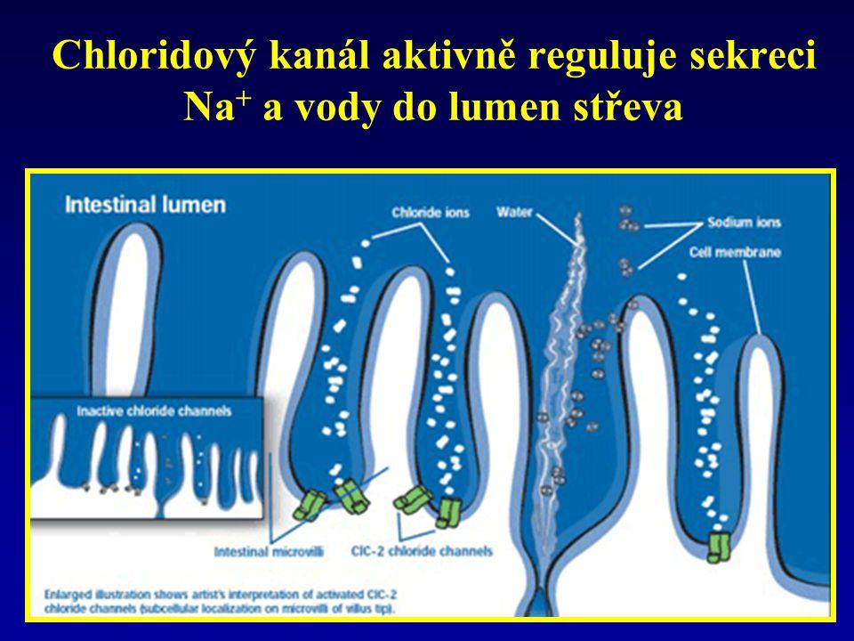 Chloridový kanál aktivně reguluje sekreci Na + a vody do lumen střeva
