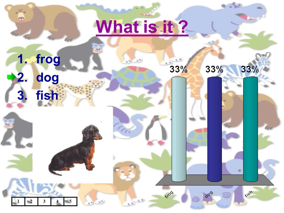 What is it 12345 1.frog 2.dog 3.fish