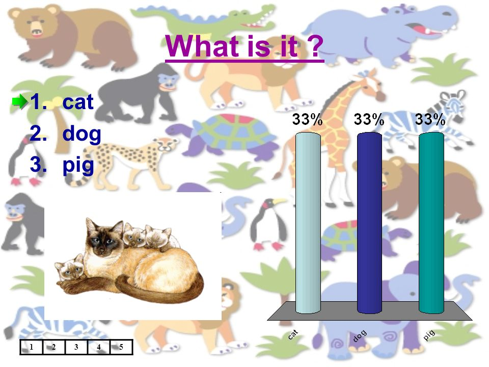 What is it 12345 1.cat 2.dog 3.pig