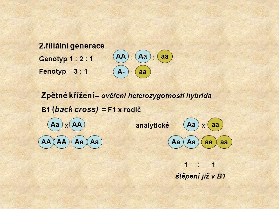AAAaaa A-aa :: : AAAa aa AA Aa aa 2.filiální generace Genotyp 1 : 2 : 1 Fenotyp 3 : 1 Zpětné křížení – ověření heterozygotnosti hybrida B1 (back cross