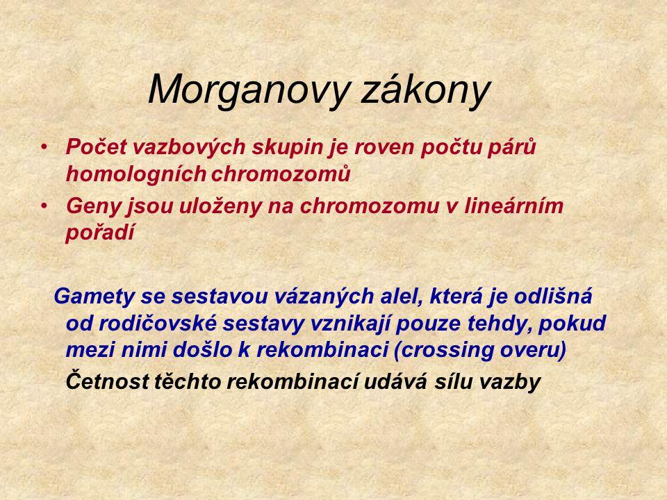Morganovy zákony Počet vazbových skupin je roven počtu párů homologních chromozomů Geny jsou uloženy na chromozomu v lineárním pořadí Gamety se sestav