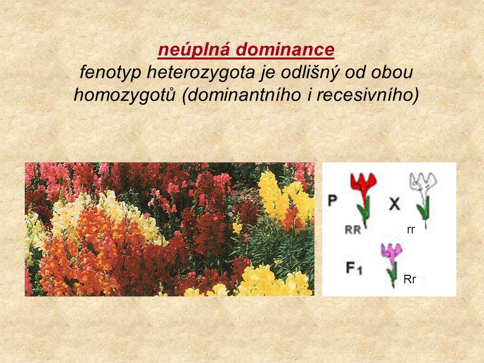 neúplná dominance fenotyp heterozygota je odlišný od obou homozygotů (dominantního i recesivního) rr Rr