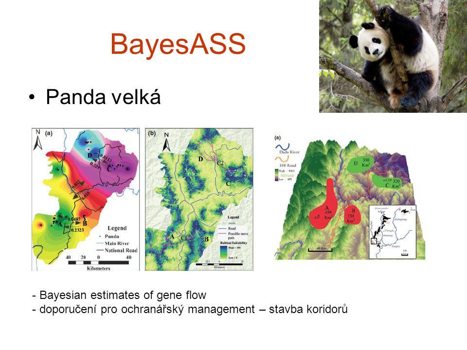 BayesASS Panda velká - Bayesian estimates of gene flow - doporučení pro ochranářský management – stavba koridorů