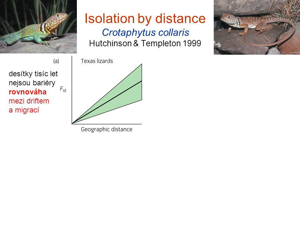 Isolation by distance Crotaphytus collaris Hutchinson & Templeton 1999 desítky tisíc let nejsou bariéry rovnováha mezi driftem a migrací postglaciálně