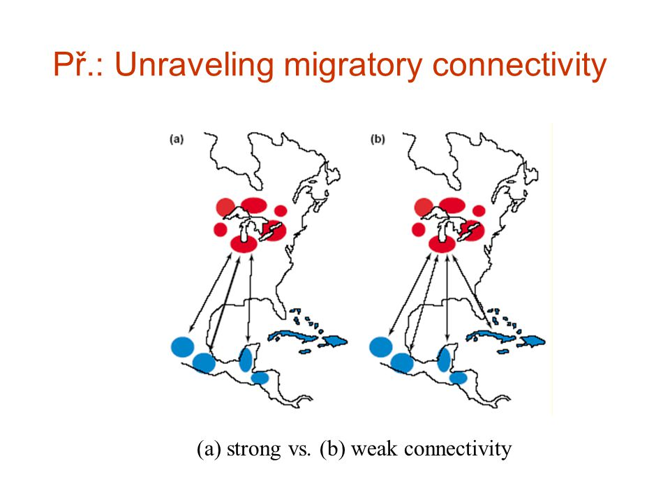 Př.: Unraveling migratory connectivity (a) strong vs. (b) weak connectivity