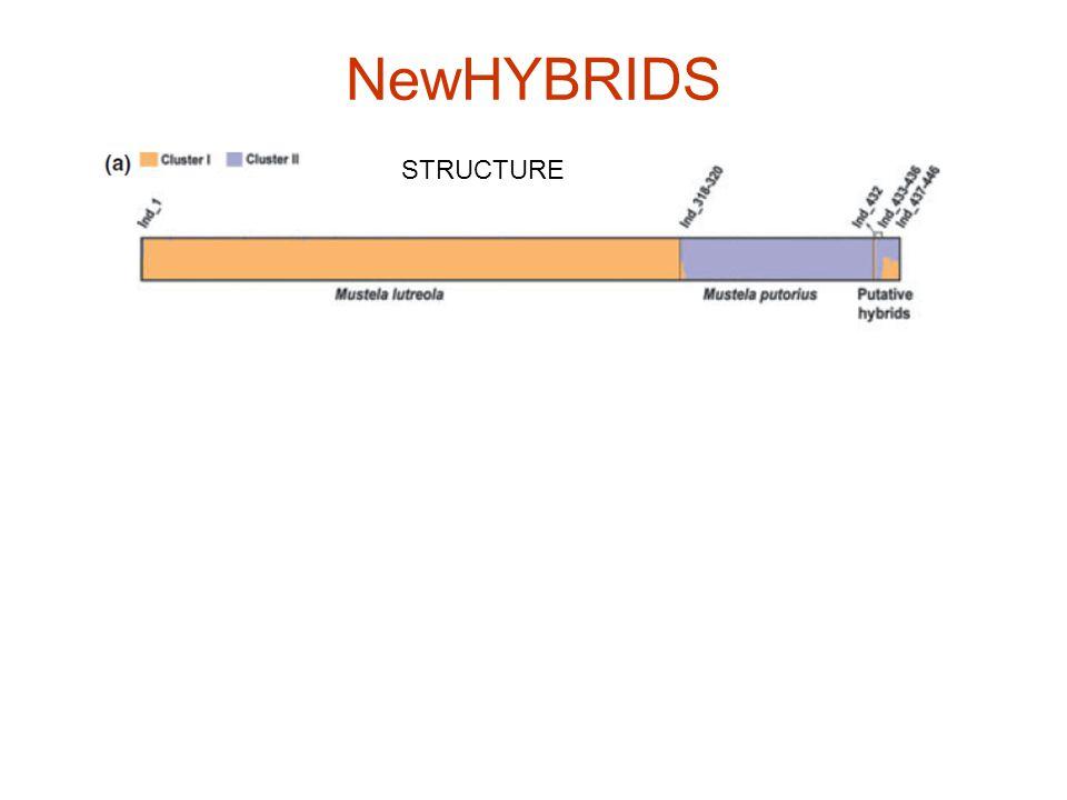 NewHYBRIDS STRUCTURE NEWHYBRIDS