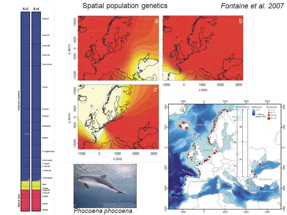 Spatial population genetics Fontaine et al. 2007 Phocoena phocoena