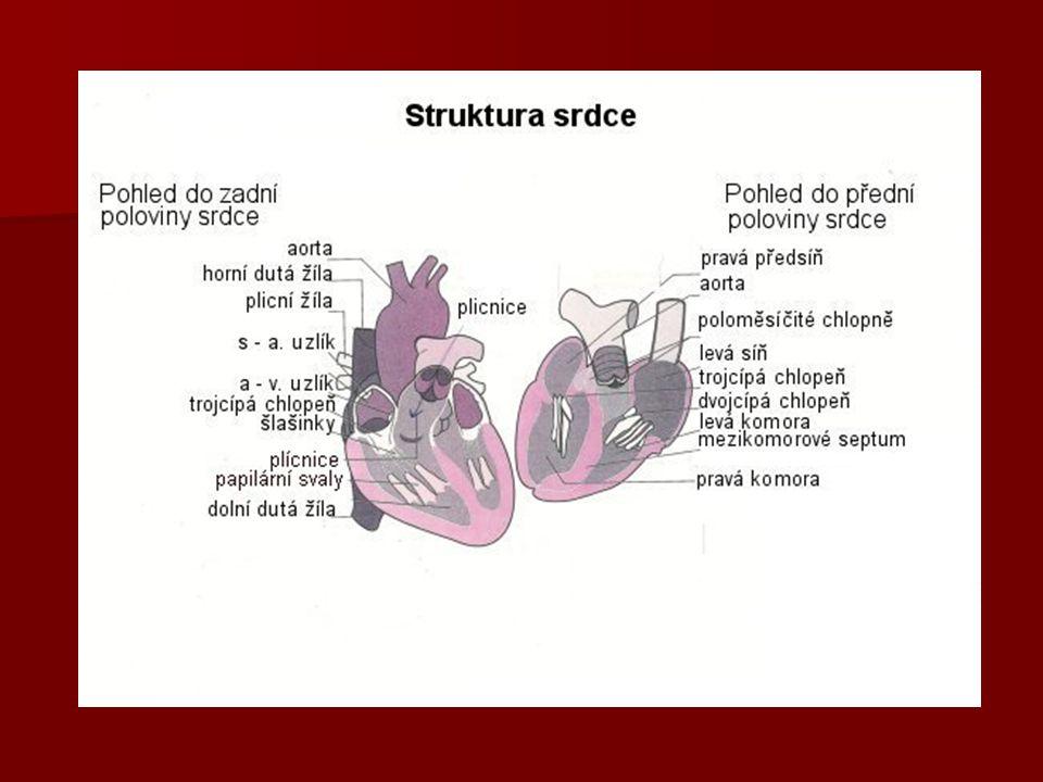 Žíly a artérie srdce horní dutá žíla (vena cava sup.), vstupuje do PP horní dutá žíla (vena cava sup.), vstupuje do PP dolní dutá žíla (vena cava inf.), vstupuje do PP dolní dutá žíla (vena cava inf.), vstupuje do PP plicní kmen (truncus pulmonalis), vystupuje z PK plicní kmen (truncus pulmonalis), vystupuje z PK čtyři žíly plicní (vv.