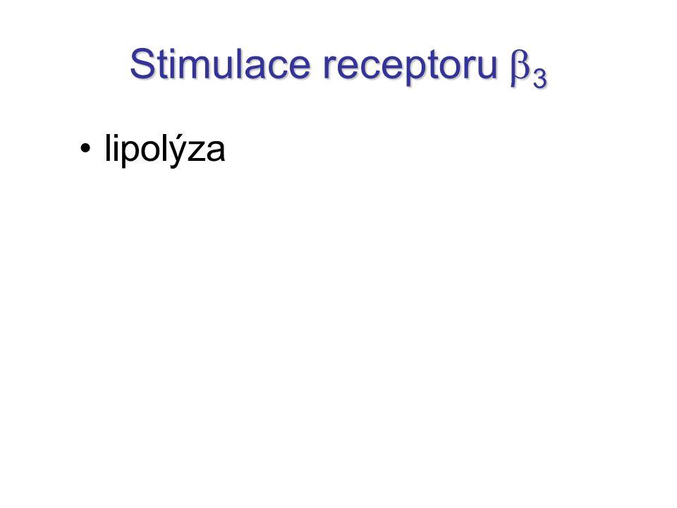 lipolýza Stimulace receptoru  3