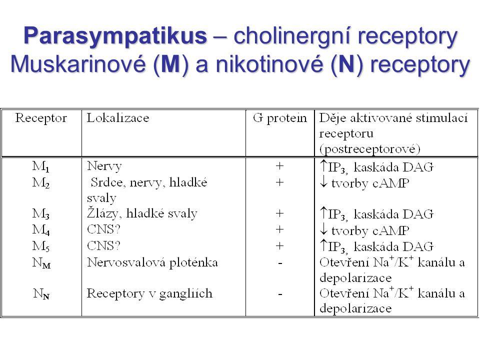 Parasympatikus – cholinergní receptory Muskarinové (M) a nikotinové (N) receptory