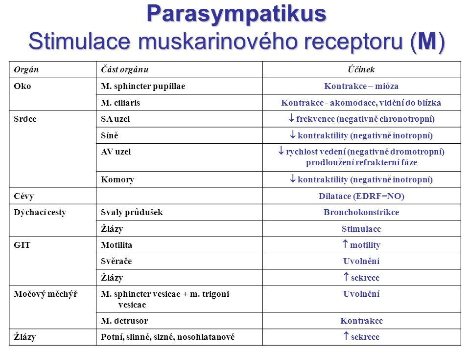 Parasympatikus Stimulace muskarinového receptoru (M) OrgánČást orgánuÚčinek OkoM. sphincter pupillaeKontrakce – mióza M. ciliarisKontrakce - akomodace