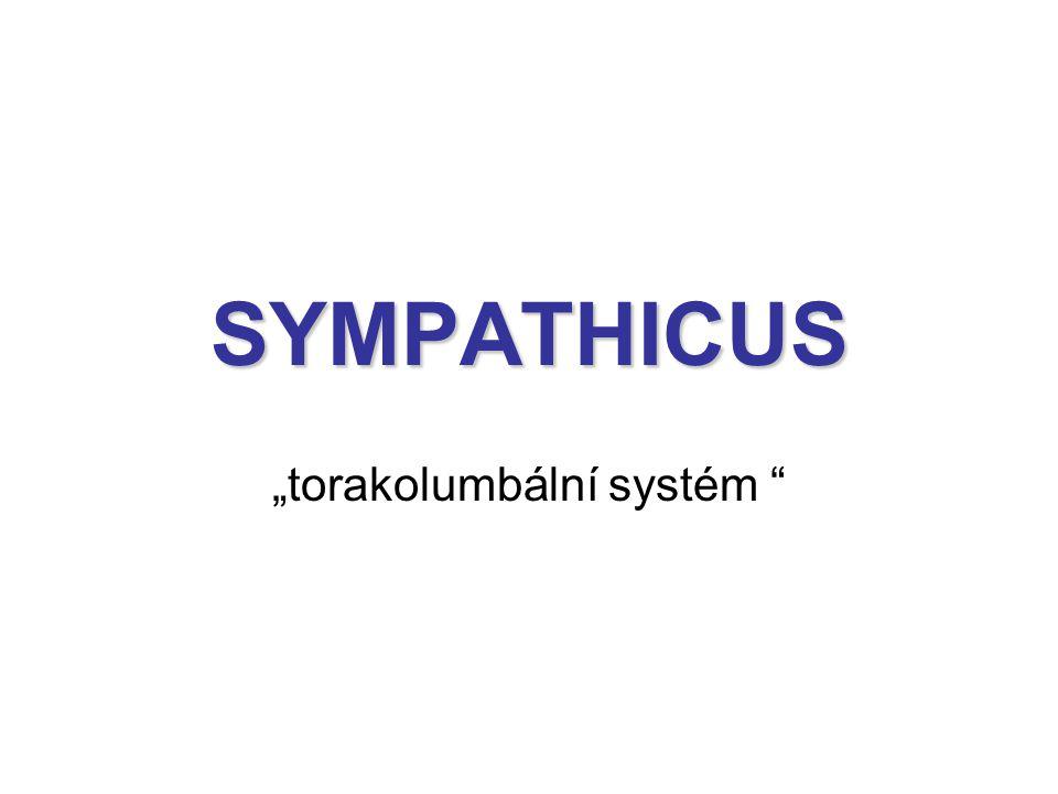 """SYMPATHICUS """"torakolumbální systém """""""
