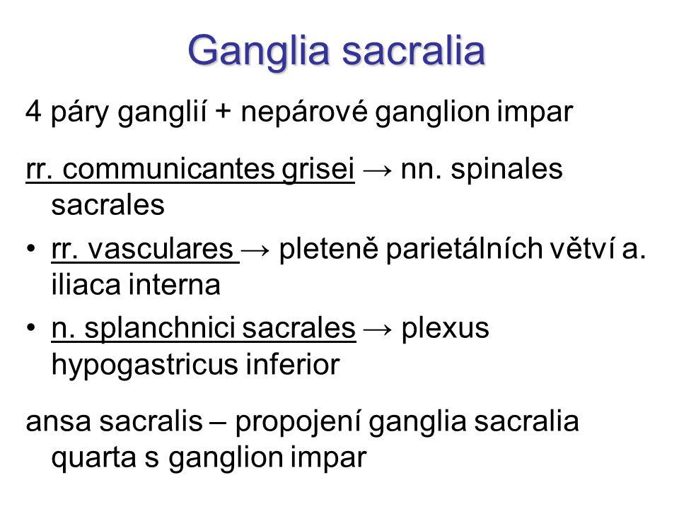 Ganglia sacralia 4 páry ganglií + nepárové ganglion impar rr.