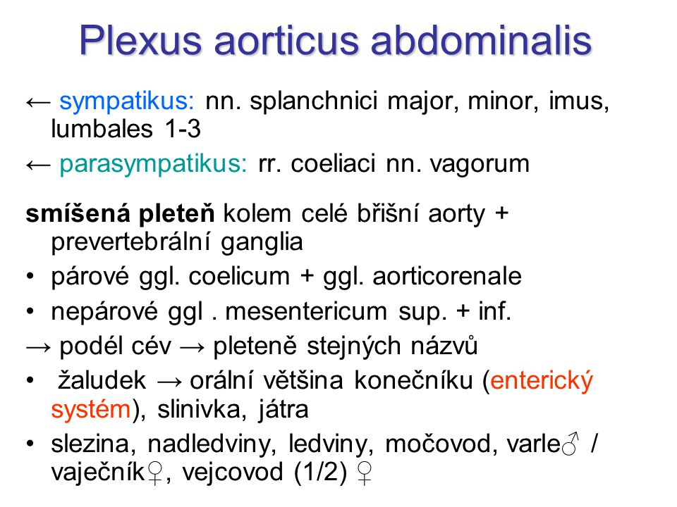 Plexus aorticus abdominalis ← sympatikus: nn. splanchnici major, minor, imus, lumbales 1-3 ← parasympatikus: rr. coeliaci nn. vagorum smíšená pleteň k
