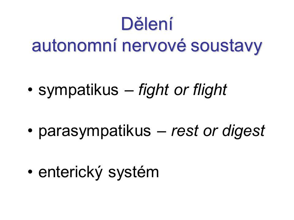 Dělení autonomní nervové soustavy sympatikus – fight or flight parasympatikus – rest or digest enterický systém