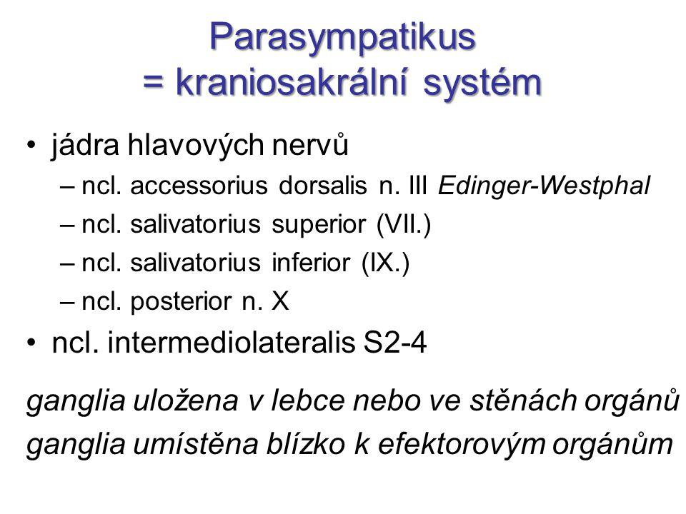 Parasympatikus = kraniosakrální systém jádra hlavových nervů –ncl. accessorius dorsalis n. III Edinger-Westphal –ncl. salivatorius superior (VII.) –nc