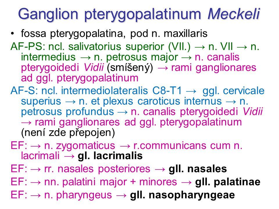Ganglion pterygopalatinum Meckeli fossa pterygopalatina, pod n. maxillaris AF-PS: ncl. salivatorius superior (VII.) → n. VII → n. intermedius → n. pet
