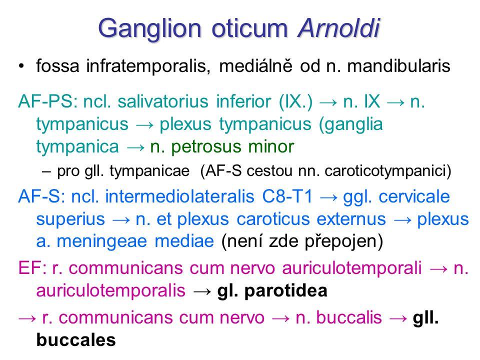 Ganglion oticum Arnoldi fossa infratemporalis, mediálně od n. mandibularis AF-PS: ncl. salivatorius inferior (IX.) → n. IX → n. tympanicus → plexus ty
