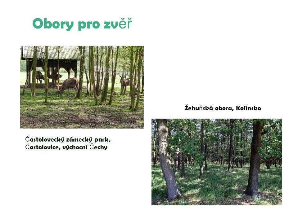 Obory pro zv ěř Č astolovecký zámecký park, Č astolovice, výchocní Č echy Žehu ň ská obora, Kolínsko