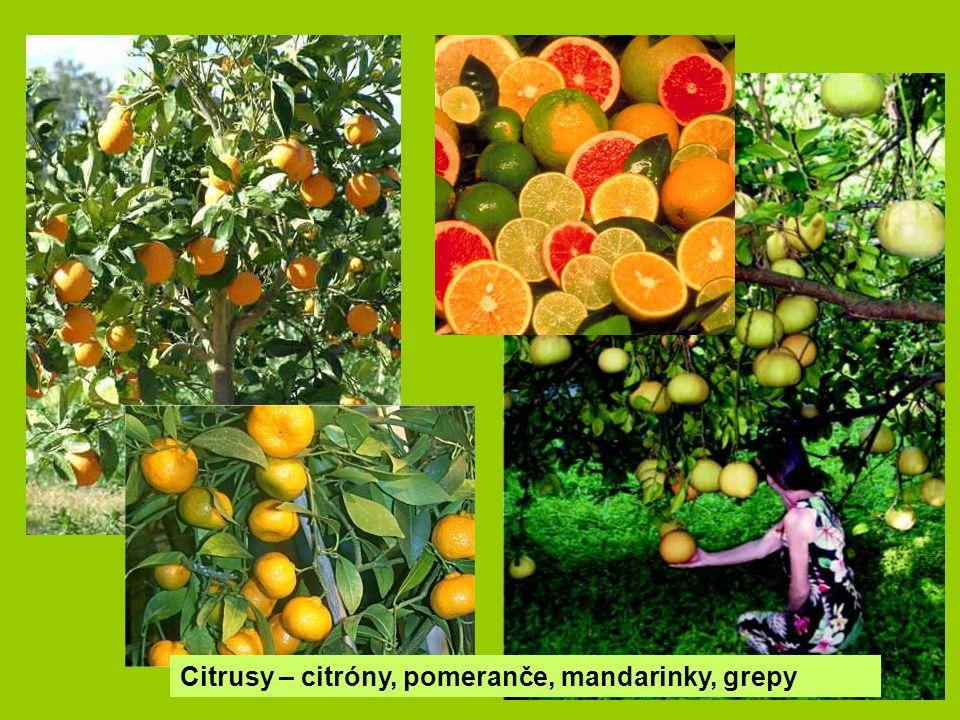 Citrusy – citróny, pomeranče, mandarinky, grepy