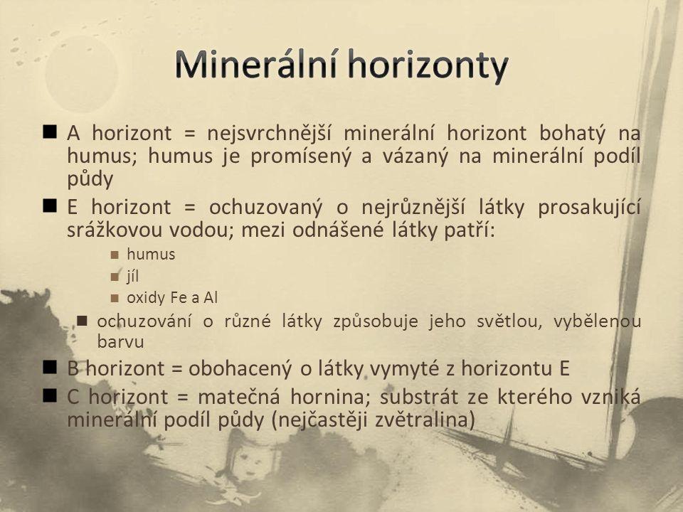 A horizont = nejsvrchnější minerální horizont bohatý na humus; humus je promísený a vázaný na minerální podíl půdy E horizont = ochuzovaný o nejrůznější látky prosakující srážkovou vodou; mezi odnášené látky patří: humus jíl oxidy Fe a Al ochuzování o různé látky způsobuje jeho světlou, vybělenou barvu B horizont = obohacený o látky vymyté z horizontu E C horizont = matečná hornina; substrát ze kterého vzniká minerální podíl půdy (nejčastěji zvětralina)