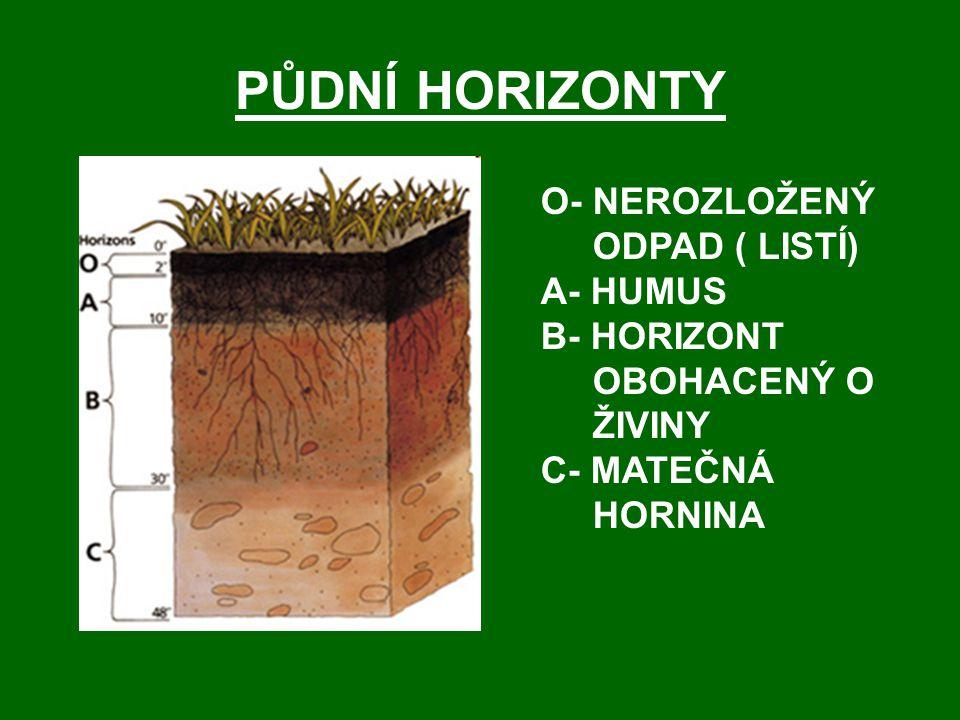 PŮDNÍ HORIZONTY O- NEROZLOŽENÝ ODPAD ( LISTÍ) A- HUMUS B- HORIZONT OBOHACENÝ O ŽIVINY C- MATEČNÁ HORNINA