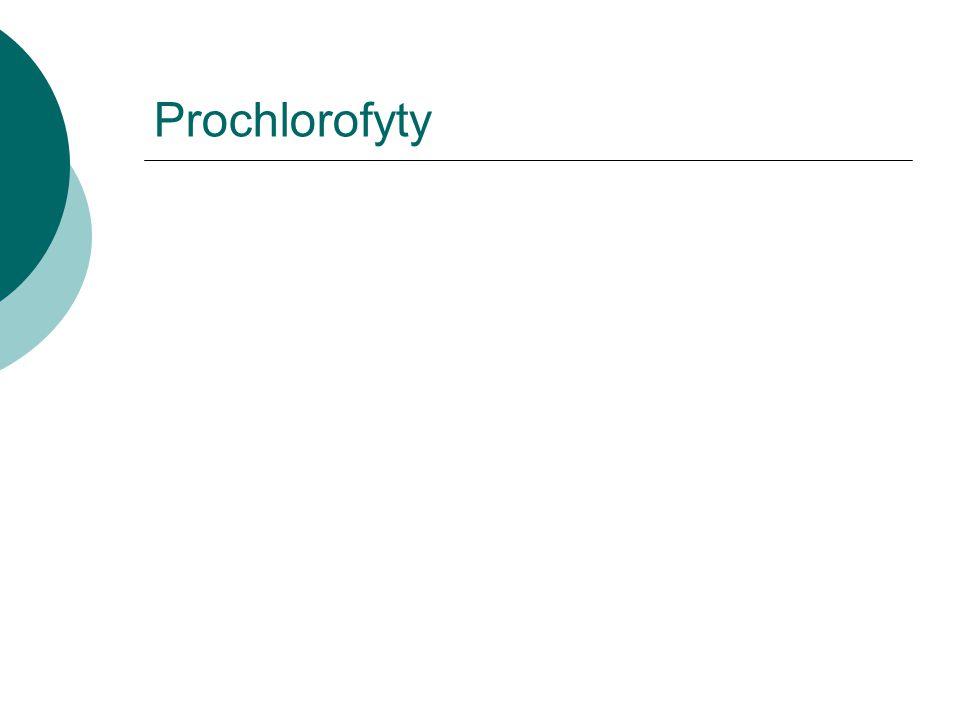 Prochlorofyty
