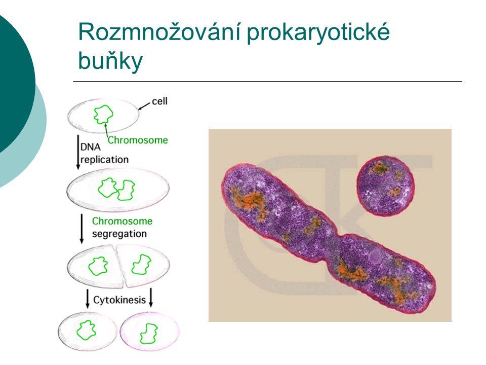 Streptococcus sp.