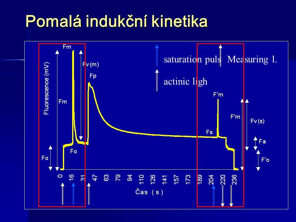 FLUORESCENCE CHLOROFYLU Fv/Fm Kapacita fotosystému II  II Efektivní kvantový výtěžek fotochemických procesů PS II qP Fotochemické zhášení qN Nefotochemické zhášení NPQ