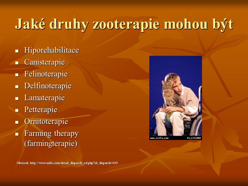 Jaké druhy zooterapie mohou být Hiporehabilitace Hiporehabilitace Canisterapie Canisterapie Felinoterapie Felinoterapie Delfinoterapie Delfinoterapie