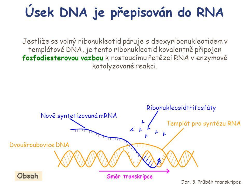 Templát pro syntézu RNA Nově syntetizovaná mRNA Ribonukleosidtrifosfát Spustit animaci Obr.